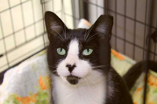 DJ is available through Pawswatch at the Community Cat Care Center in Johnston.