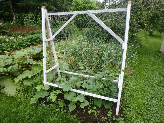 A cucumber trellis is easy to build.