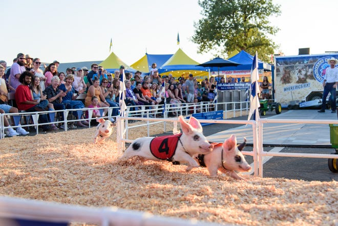 All Alaskan Racing Pigs will return to the Lane County Fair this year.