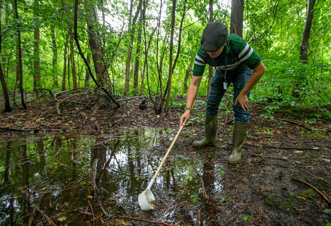 Brett Davis, St. Joseph County Health Department's assistant director of environmental health, searches for mosquito larvae Tuesday in a wetland area near the north end of Division Street in Mishawaka.