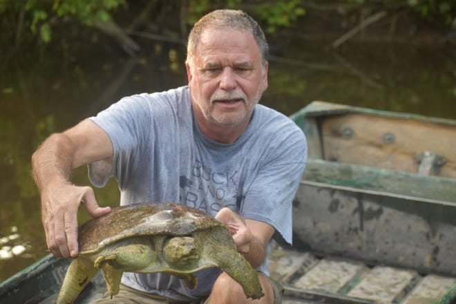 Luke and his buddies released everything from wild hogs to soft shelled turtles this past week. Jeff Rice shows off a big 'softie' that decided the fresh liver baited trotline was more temptation that it could stand.