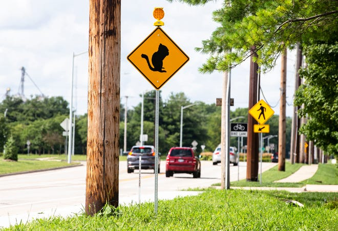 A street sign with a flashing light to warn motorists of the presence of Franklin's ground squirrels along Archer Elevator Road in Springfield, Ill., Monday, July 12, 2021.  A colony lives along the embankments of the old raised railroad beds that the nearby Sangamon Valley Bike Trail is built on is considered one of the densest in the state.