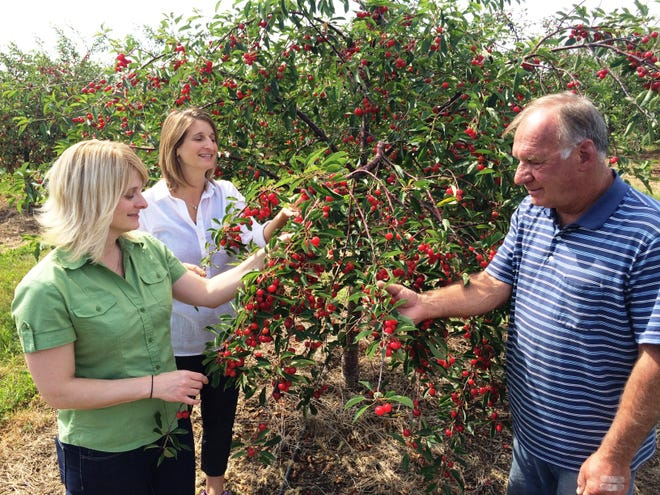Bob Lautenbach, right, looks over a cherry tree with his daughters, Erin Lautenbach and Carrie Lautenbach-Viste, at the Orchard Country Winery and Market in Fish Creek in this 2015 photo. Bob Lautenbach, who turned his parents' family farm into a year-round agri-tourist destination and winery, died this week.