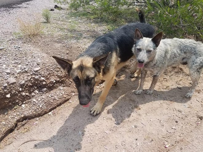 Two loose dogs are spotted roaming the desert near the Mesquite exit Monday, July 12, 2021.