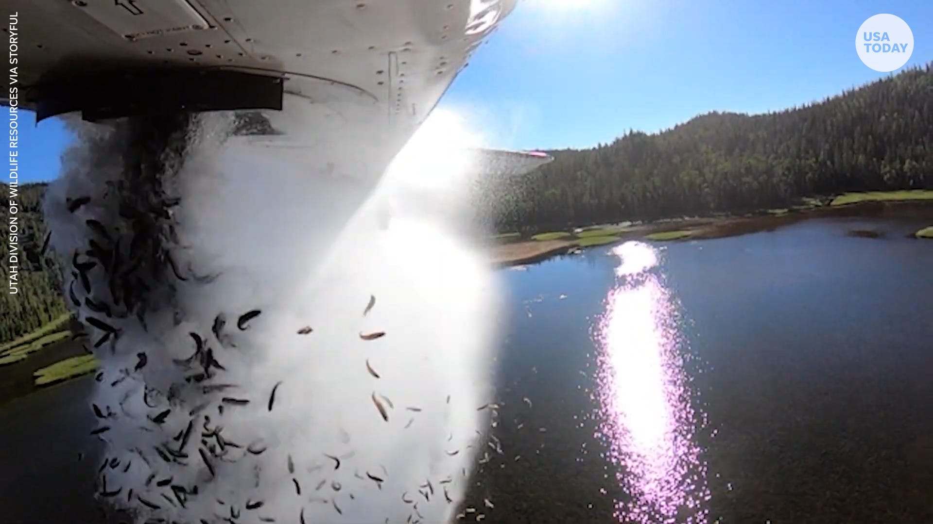 Thousands of fish dropped from planes in hopes to restock remote lakes in Utah