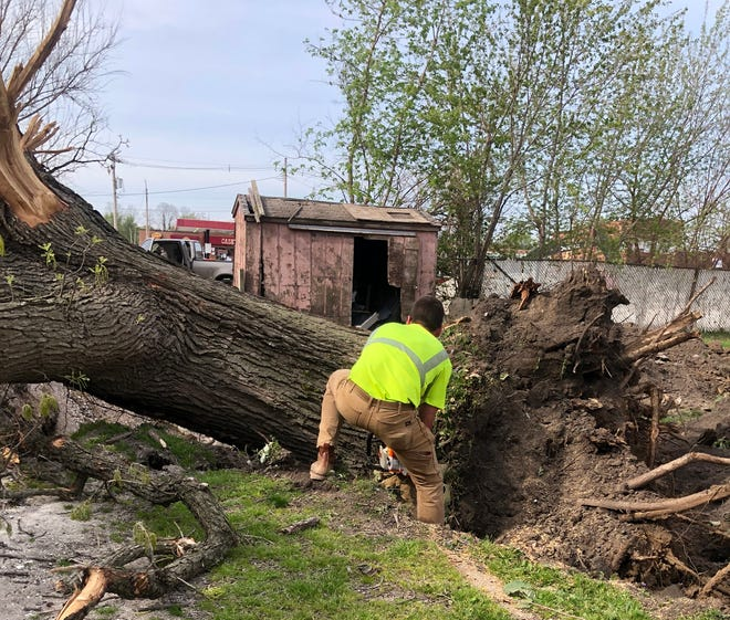 Justin McNaught from Urban Milling Co. harvests one of the trees that was cut down from the site of the new Galesburg Public LIbrary. McNaught is going to mill the trees to make tables for the new library.