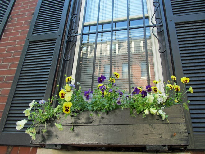 Adding to the beauty of the city, many homes in the South End plant flowers in window boxes.
