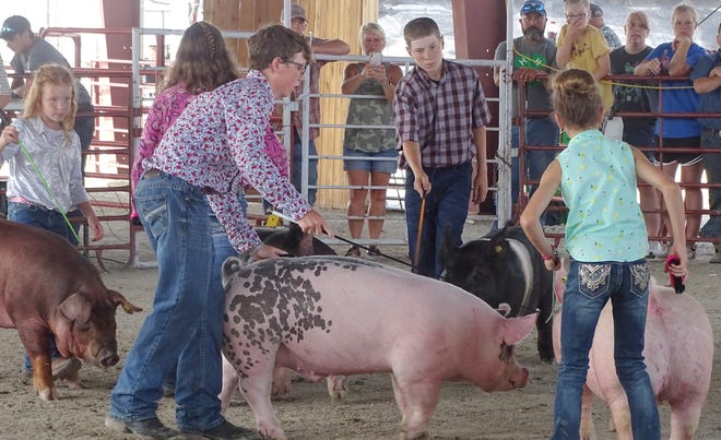 The Franklin County 4-H'ers showed their hogs during the Swine show at the Franklin County Fair