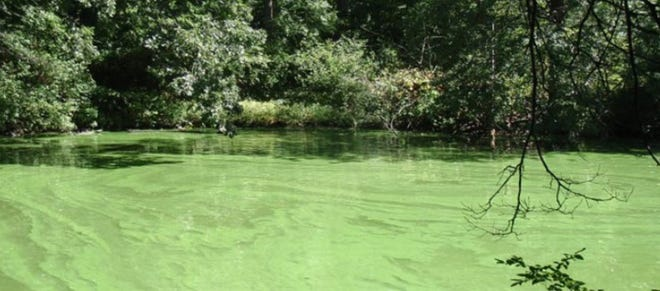Blue-green algae can make the water body look like pea soup, the Rhode Island Department of Environmental Management says.