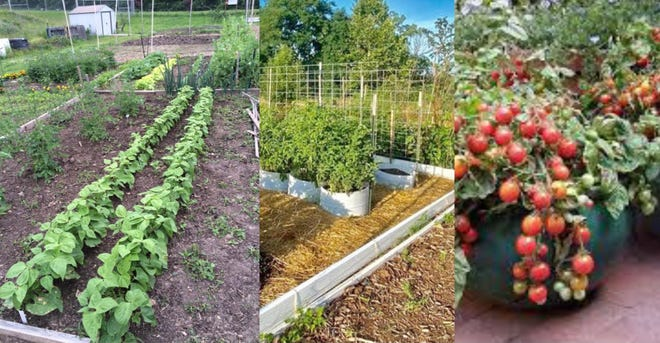 The Rolla Community Garden is offering a free class.