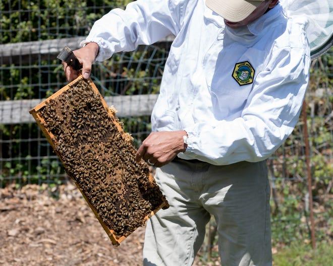 Beehives at Greenwood Gardens.