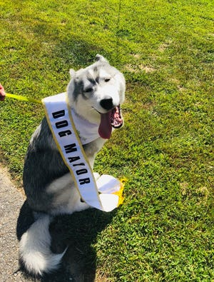 Koda, the current mayor of the Gardner Dog Park, will leave office after his successor is chosen during an election that will begin on the park's Facebook page on Aug. 1.