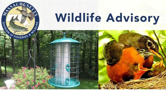 Birds are dying from a mysterious illness in other states. MassWildlife is advising the public here to take down birdfeeders and birdbaths.