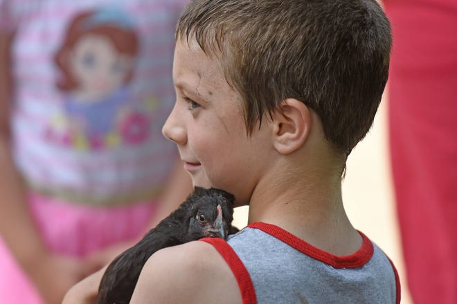 Lewis Brinley, 7 years old, gets some cuddle time with a chicken Thursday morning during the Fun in the Park program at South Park. Black Willow farms brought ponies, chickens, and a rabbit for children to interact with and pet.