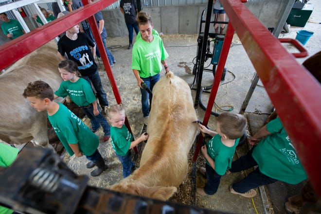 """Anniston Downing, 4, left, Peyton Sifrit, 14, and Will Gaston, 6, prepare their cow for exhibition during the Madison County Fair's """"Livestock 101"""" show on Friday."""