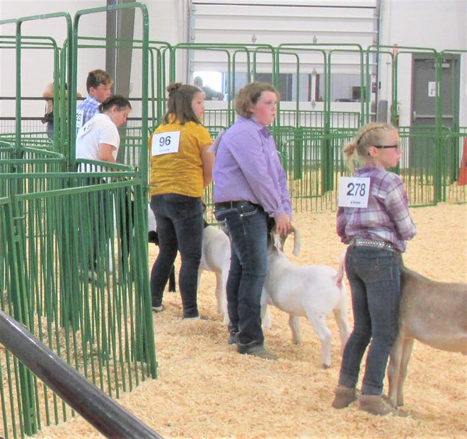 In spite of restrictions and limitations, Holmes County was able to host a successful junior fair in 2020, where the kids got to experience showing their animals.