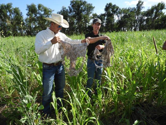 "South Dakota Soil Health Coalition board vice chairman Shawn Freeland and SDSHC soil health technician Austin Carlson display the results of a ""soil your undies"" test at the 2020 Soil Health School near Mitchell, SD."