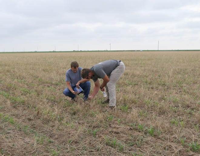 John Kirkchoff of Garden City and Jordan Koehn of Sublette examine the soil at a No-Till on the Plains event just south of Liberal.