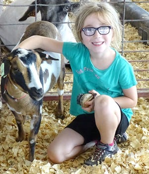 Part of the process of showing animals at the fair is taking care of them while they are in the pen and make sure they are properly groomed before entering the show ring.