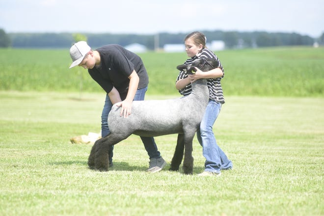 Hayden, 12, and Harper, 9, Horning practice bracing their lamb, Coco, as they prepare at home for the 2021 Crawford County Fair.