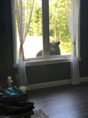 Briahna Lang, 10, captured this photo of a black bear staring into her Vesper home this summer.