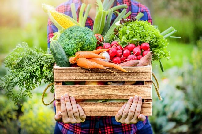 Farmer holding wooden box full of fresh raw vegetables.