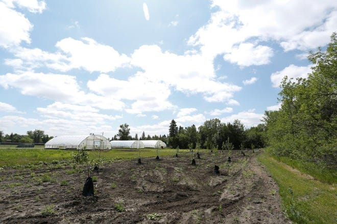 This orchard will provide the campus, community members and Dakota College students fruit, peace and tranquility while also providing education on the tree and shrub species.