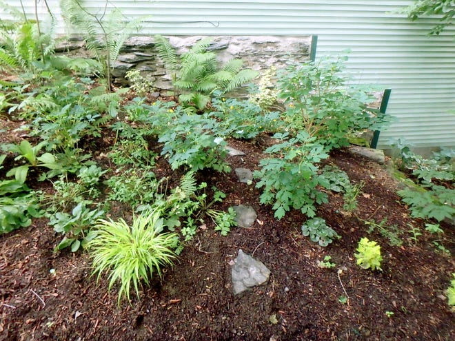 This new bed needs mulch to keep down weeds and hold in moisture.