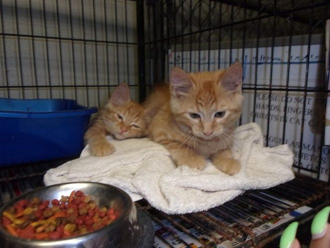 Jason Allison, the director for the Robeson County Animal Shelter, said the majority of animals that enter the shelter are found on the street.In some cases, he said, animal control can pick up45 cats in one day.