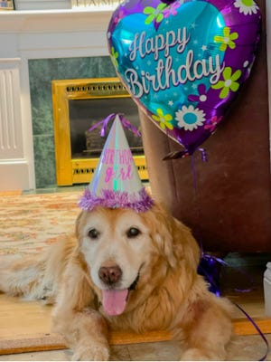 The Law family dog, Moxie, just turned 15 on July 4. Moxie is a golden retriever and their typical lifespan is 10-12 years, which she has greatly outlived! Moxie was adopted at 3-years old and she has brought so much comfort and joy to her family ever since.