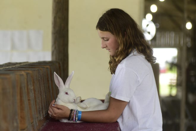 Aryana Sexton, 11, of Crestline, holds her New Zealand rabbit, Leo, on Monday as she practices for Tuesday's shows.