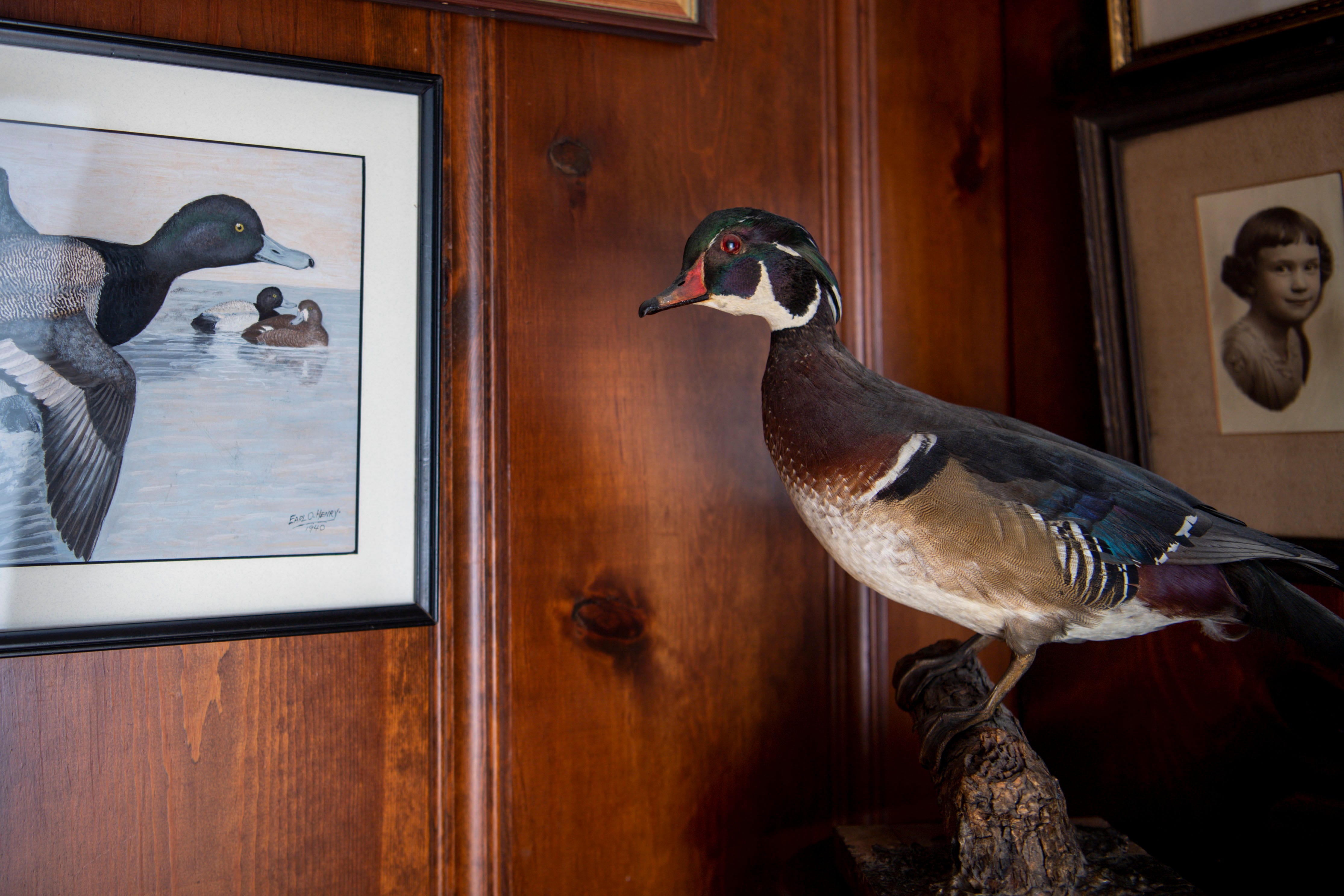 A duck hunted and taxidermied by Earl Henry, Sr. is seen on display in his son Earl Henry, Jr.'s, home in Belle Meade, Tenn., on Monday, July 19, 2021.