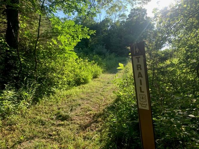 Sun shining on freshly groomed trail.