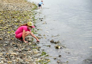 Lucy Bryeans, 8, checks for sea life underneath the rock at the waters edge during a field trip to Scenic Beach State Park in Seabeck on Tuesday, July 20, 2021.