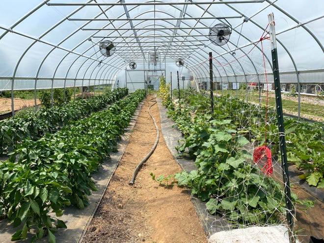 Inside a hoop house at Project Grows in Verona.