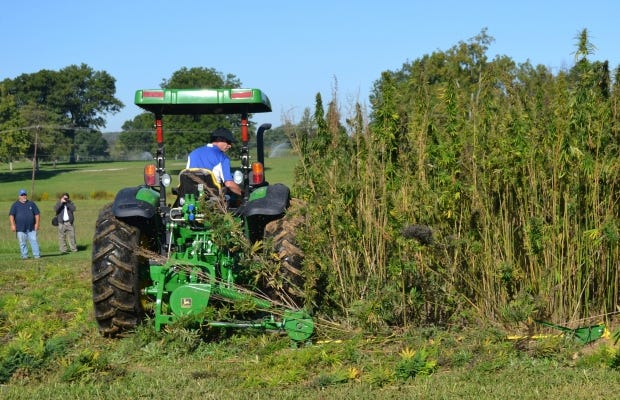 In this Sept. 23, 2014, file photo, a tractor cuts a small plot of hemp at a University of Kentucky research plot near Lexington, Ky.