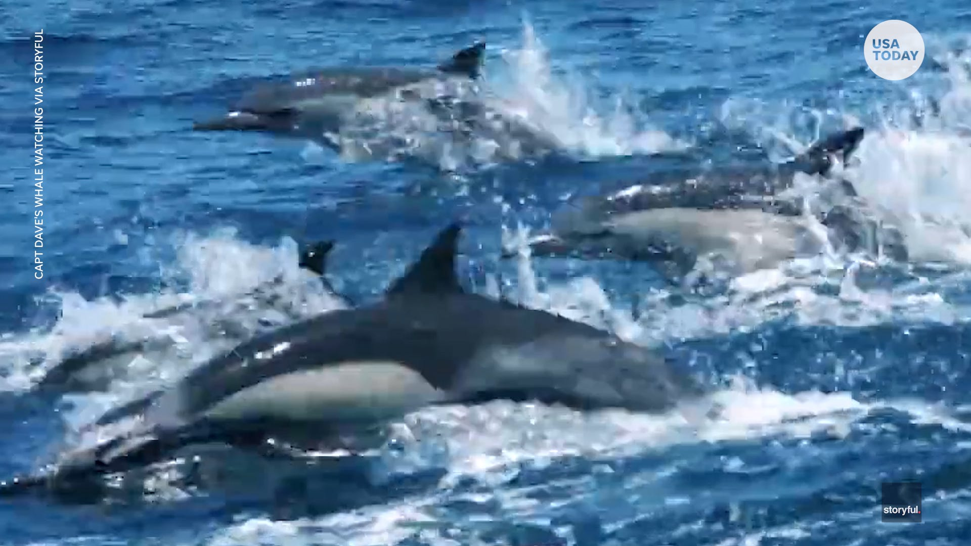 Dolphins stampede alongside whale-watching boat in California