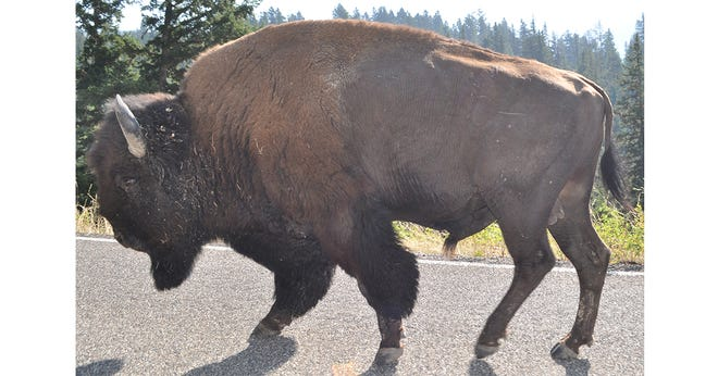 Oklahoma School for the Deaf has chosen the Bison to replace Indians as the official school mascot.