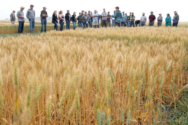 Kevin Smith, center, back to the camera, discusses his barley research in a field plot north of UMN Crookston along Highway 75.