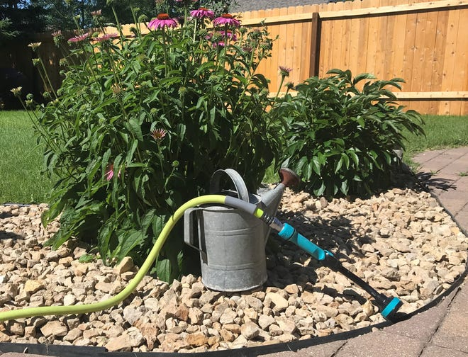 In the absence of rain, plants need approximately 1 to 1.5 inches of irrigation per week.