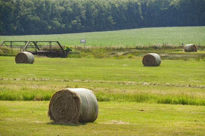Recent rainy weather has caused headaches for hay producers, who need dry days to cut quality forages.