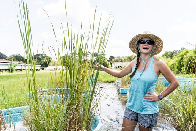At the Nicholls Farm, graduate student Ashleigh Lambiotte explains her master's thesis looking at how different marsh plants would react to river diversions that send sediment and fresh water into Louisiana's eroding coastal wetlands.