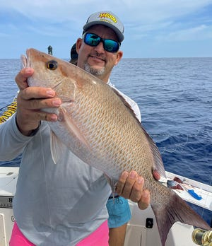 Kyle Gooding of Lakeland caught this 24-inch mangrove snapper on a live scaled sardine while fishing nearshore in 45 feet of water off Anna Maria Island with Capt. John Gunter last week.