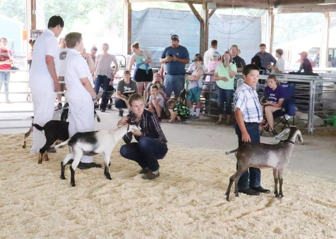 Showing goats was among the activities taking place at the Livingston County Ag Fair Wednesday.