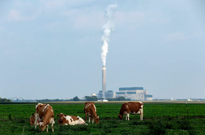 Cattle graze on a farm near the Prairie State Energy Campus in Marissa, Ill., Wednesday, July 21, 2021. The coal fired power plant uses coal mined directly adjacent to the plant and provides electricity to 36 municipalities and 20 rural electric cooperatives across Illinois, and provides power to 2.5 million homes. [Justin L. Fowler/The State Journal-Register]