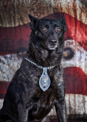 """Wellington K9 """"Reed"""" retiring from the police department on Thursday, July 29"""