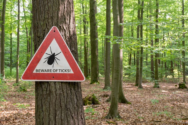 Ticks are most prominent from April to September and they like a lot of different habitats. They tend to hang out in areas where there are tall bushes, trees, shrubs and leaf litter.