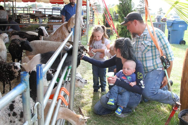 Nate Forsythe and Sarah Mullholand, along with their children Isley, Isiah, and Isacc feed the goats and sheep at the Ottawa County Fair on Thursday afternoon. The couple, who reside in Oak Harbor, brought their youngest son Isacc to the fair for his very first time.