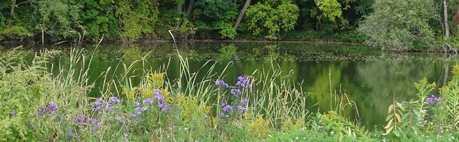 The Erie Canal in Macedon, Wayne County, with wildflowers on the bank and reflections of trees on the water.