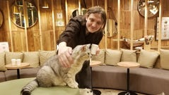 David at a cat cafe in Tokyo in 2018.